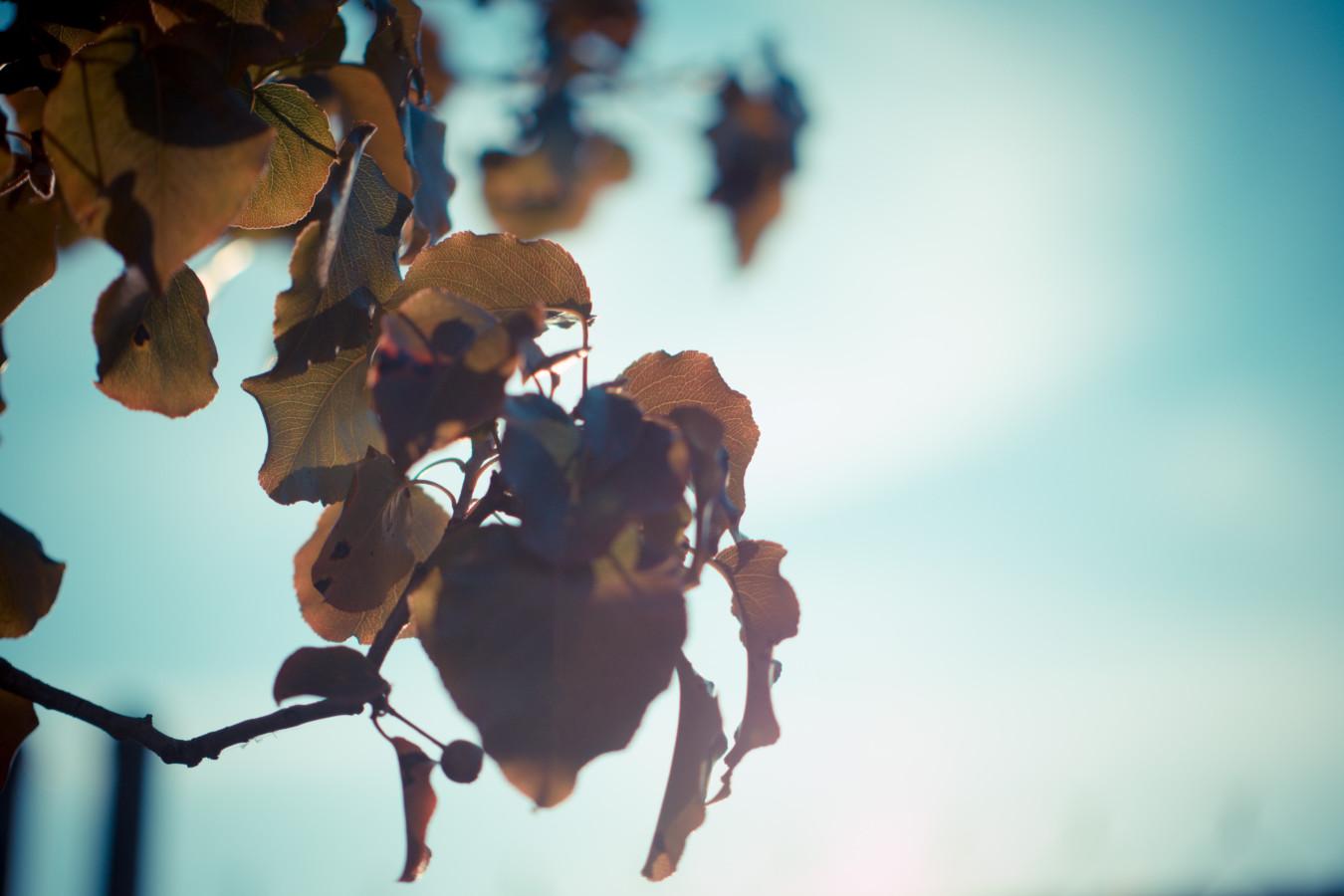 plants-16